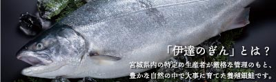 伊達のぎんとは 宮城県内の特定の生産者が厳格な管理のもと、豊かな自然の中で大事に育てた養殖銀鮭です。