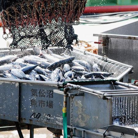 高度衛生管理を実現 気仙沼魚市場