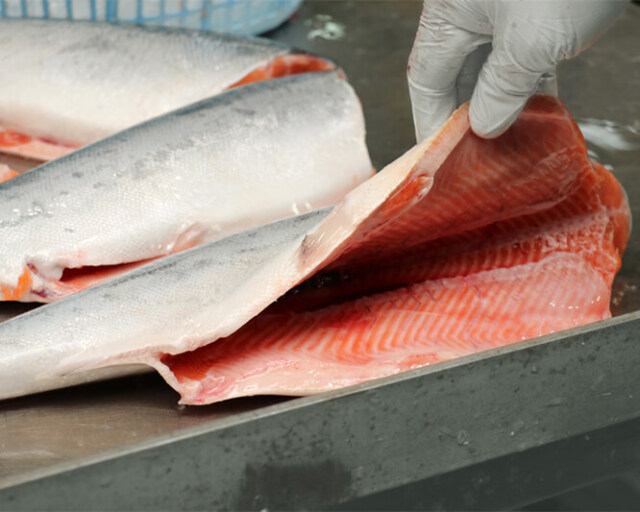 宮城県産銀鮭