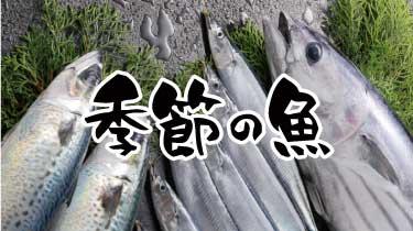 季節の魚 商品カテゴリから選ぶ